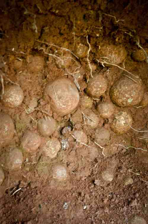 Ahom-era cannonballs, Kajolichoki Vilage